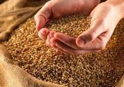 Продаю  пшеницу,  зерноотходы,  овёс,  чмень.